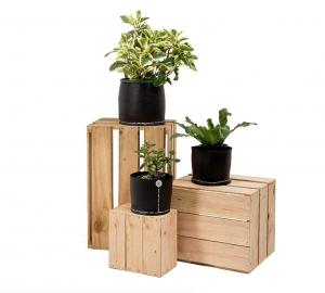 shop planters online